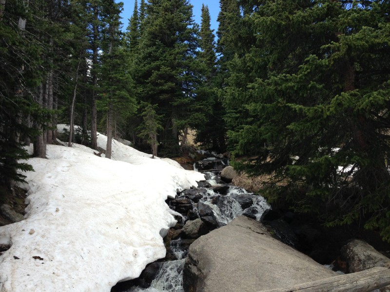 Alpine Brook right below treeline
