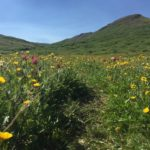 Amazing flowers on the way up Little Giant